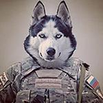 Wolfy's Photo